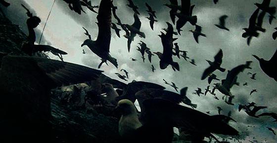 Leviathan_birds