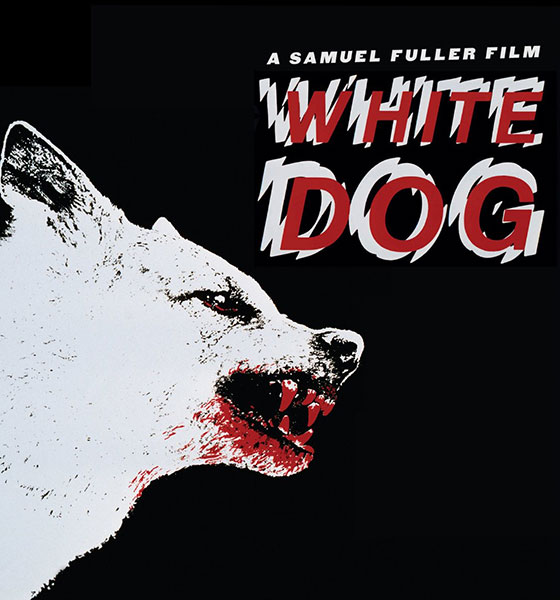 White-Dog-BD